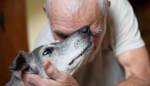 Personnes âgées isolées : adoptez un animal
